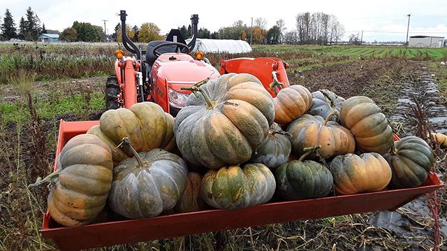 Paul made an early trip down to @seattlewholesalegrowersmarket this morning with our final load of pumpkins - including a bunch of these beautiful musque de provence 🌟 From our field to you 😘