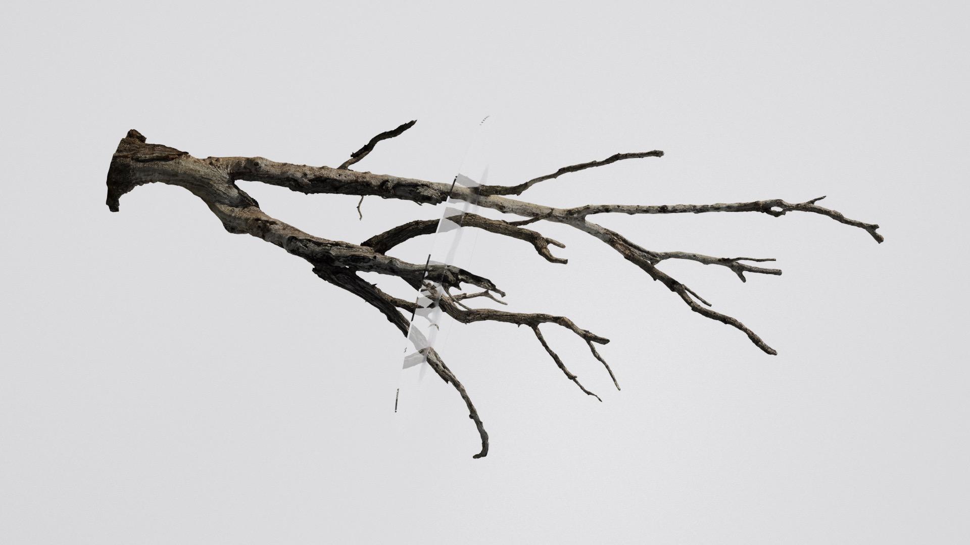 Tree Stump-10.Still_Main.0843.jpeg