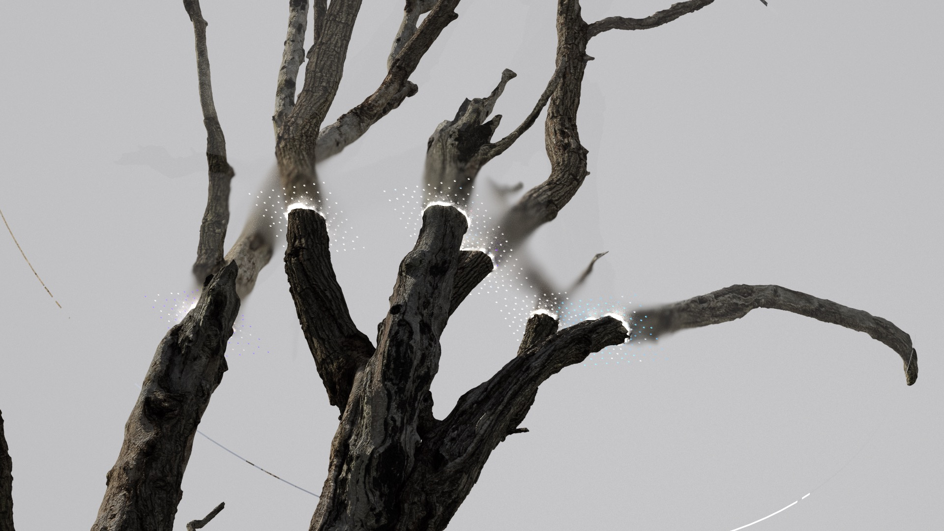 Tree Stump-10.Still_Main.0791.jpeg