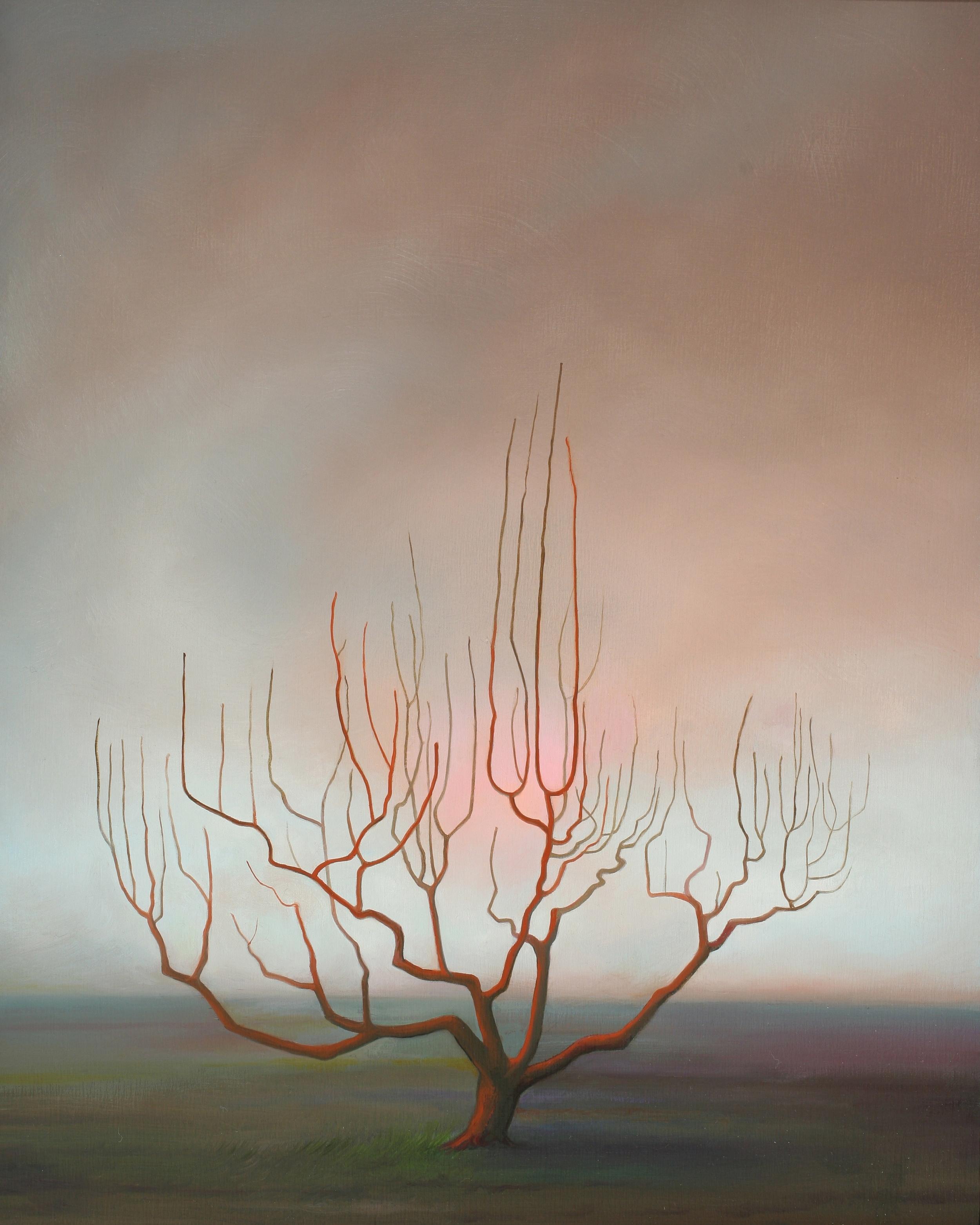 Winter Sun ('Sol De Invierno')