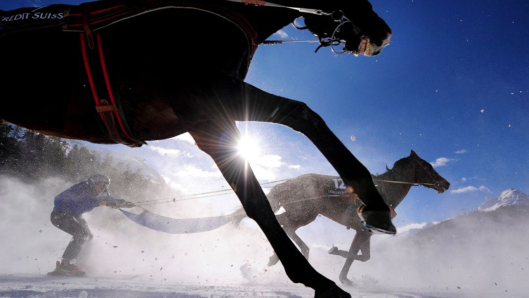 Snow Harness Racing