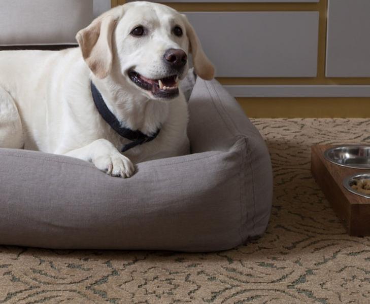 the benjamin-gooddog-dog-program