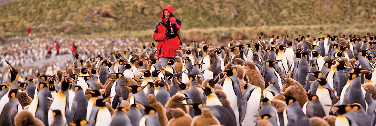 Amongst the Penguins in South Georgia