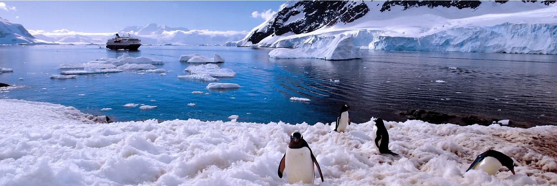 Antarctica wildlife