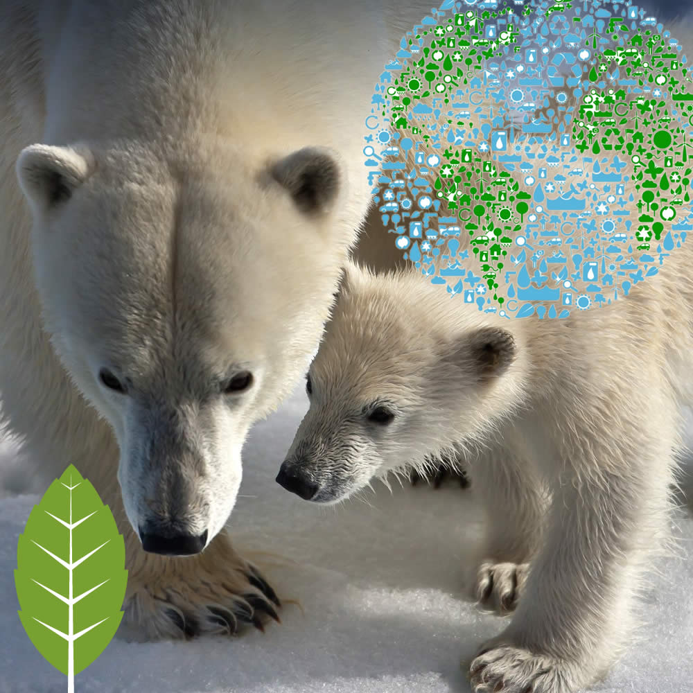 FIN Mattress cares about our global environment supportING the National Forest Foundation & World Wildlife Fund