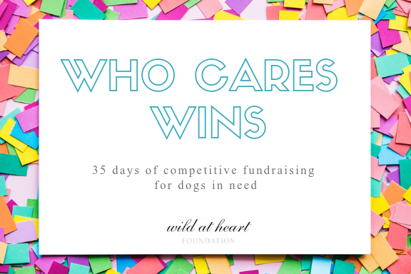 Who Cares Wins — Wild at Heart Foundation