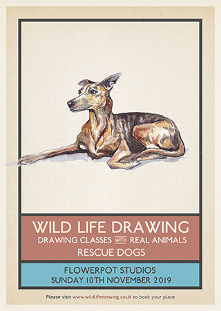 WildlifeDrawing_RescueDogs_classes.jpg