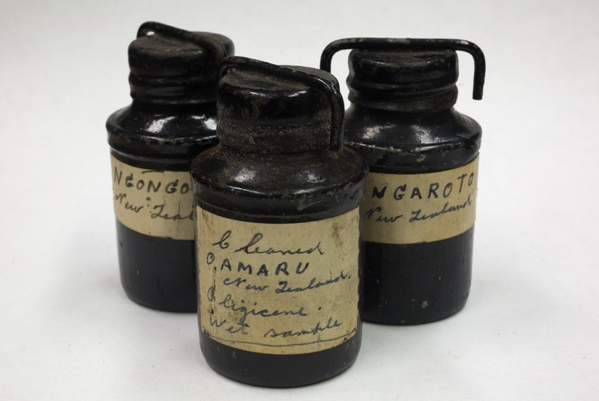 Bottles of cleaned Oamaru diatomite, in the collection of the Academy  of Natural Sciences, Philadelphia.  (Photographed 2015)