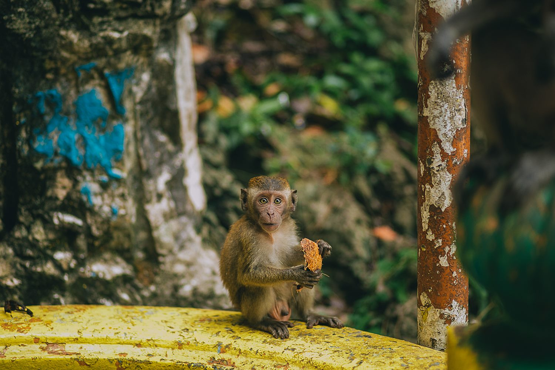 odd monkey looks