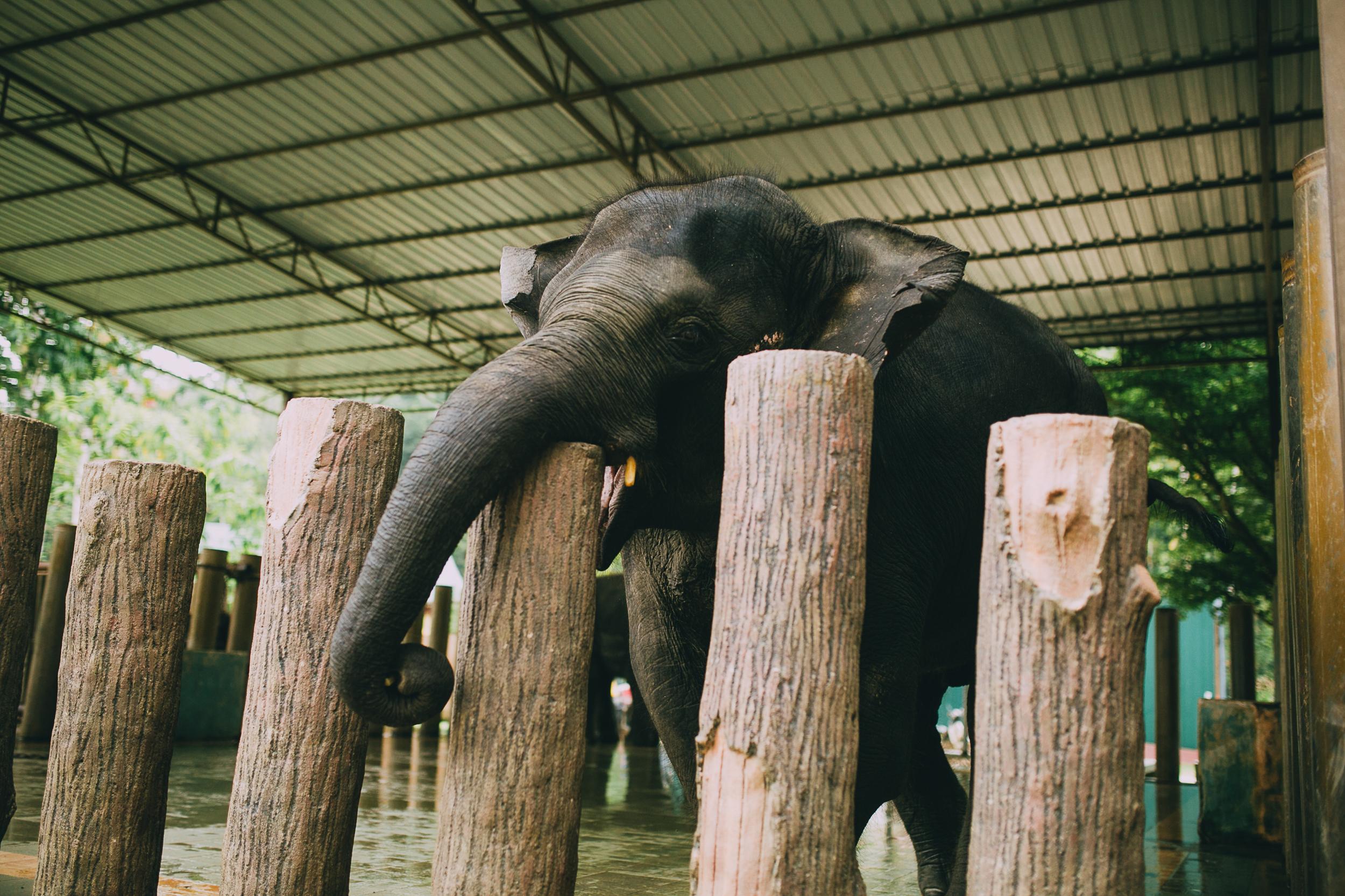 elephant _ kendell tyne photography