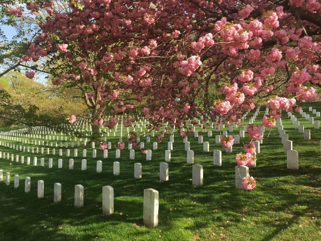 Arlington National Cemetery, April 2015. Beauty and meaning from death.