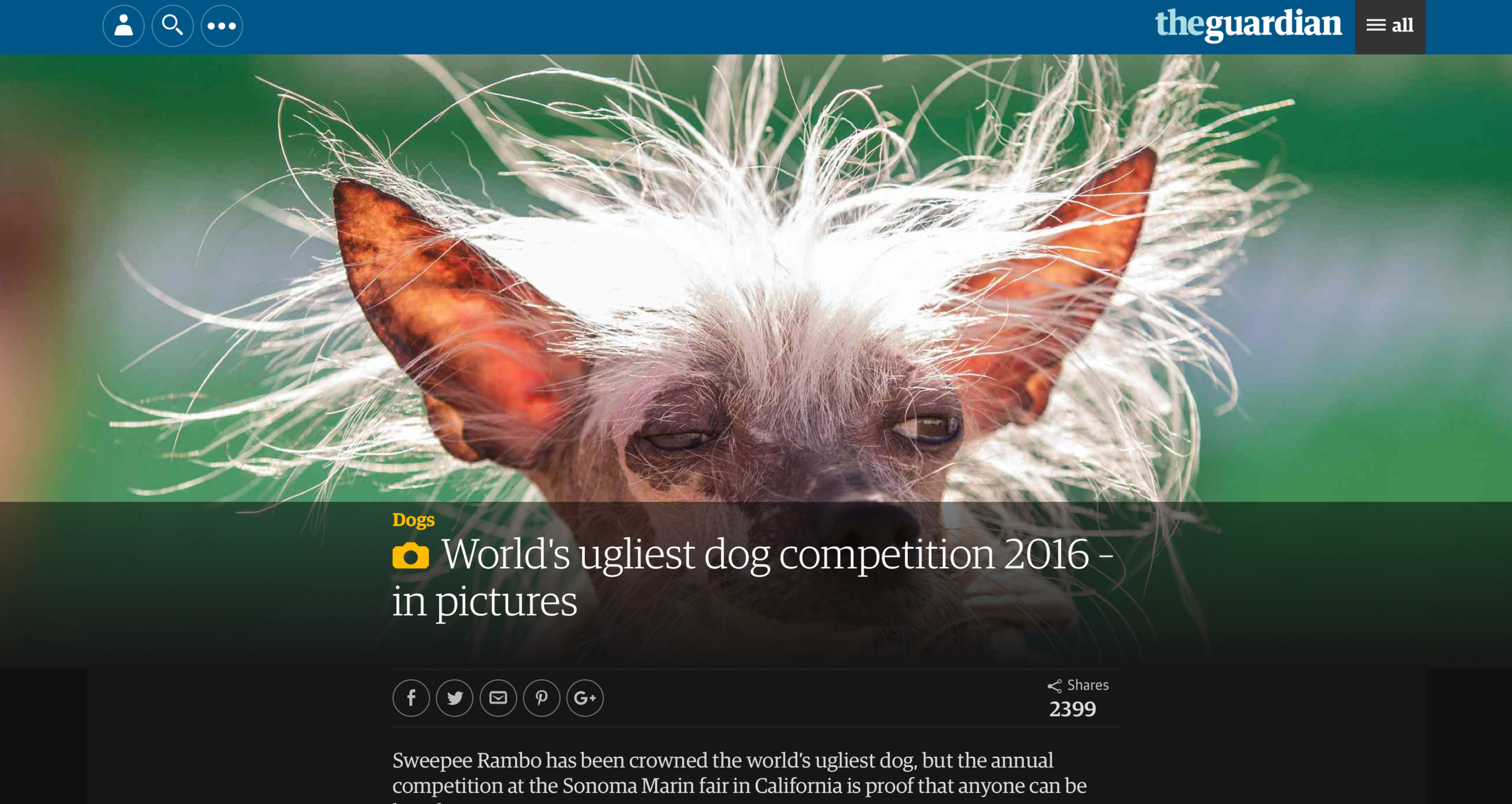 Ugliest Dog Contest - The Guardian