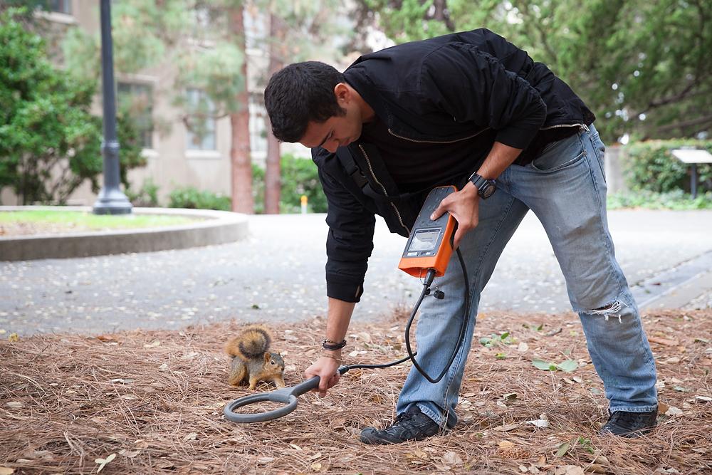 2491266_la-me-uc-berkeley-squirrels-dasilva_07.jpg