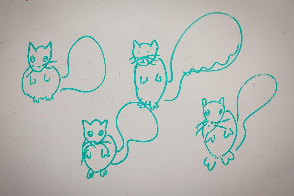 2491266_la-me-uc-berkeley-squirrels-dasilva_02.jpg