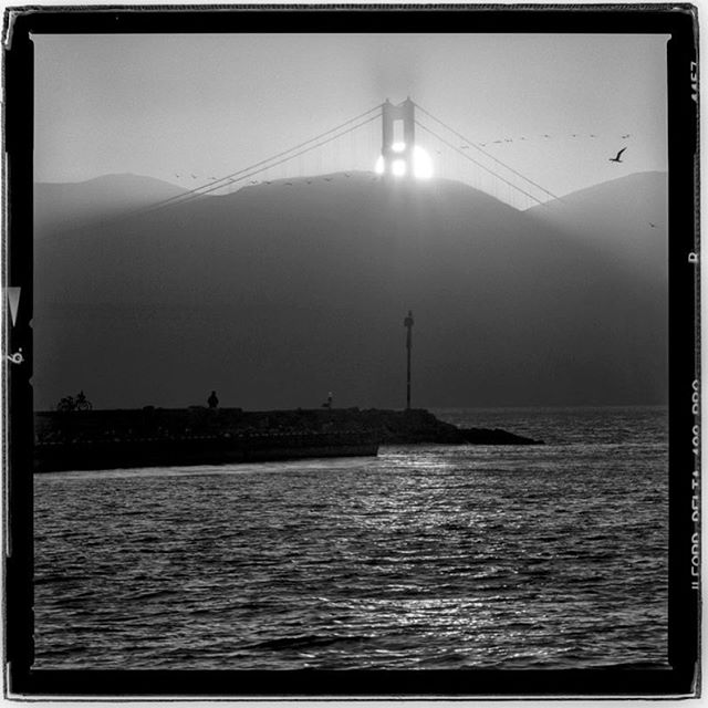 "LIFE SQUARED - ""summer setting shades"" © 2018 Peter DaSilva. #summer #season #silhouette #goldengatebridge #fog #haze #sunset #wildlife #sanfranciscobay #120 #ilford #delta400pro #bw #film #fullframe  #hesselbald #500f8 #filmisnotdead #filmlover #6x6 #analog #nophotoshop #filmphotographer #pdsphoto #peterdasilva #analogueposse"