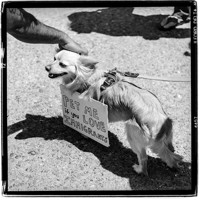 "LIFE SQUARED - ""pet me"" © 2018 Peter DaSilva. #stoptrump #familiesbelongtogether #petme #seperation #fireice #immigration #sanfrancisco #dog #120 #ilford #delta400pro #bw #film #fullframe #rolleiflex #35e3 #filmisnotdead #ilfordphoto #filmlover #6x6 #analog #nophotoshop #filmphotographer #pdsphoto #peterdasilva #rolleiclub #analogueposse"