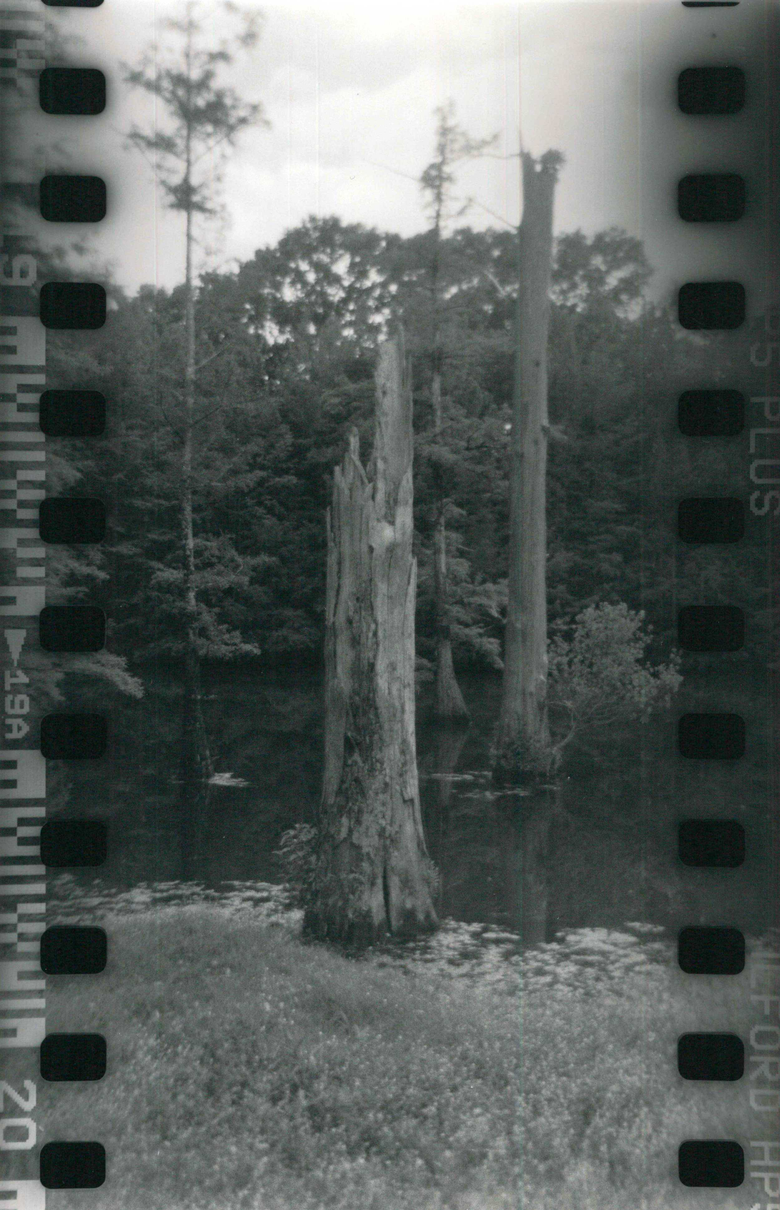 Jackson Swamp