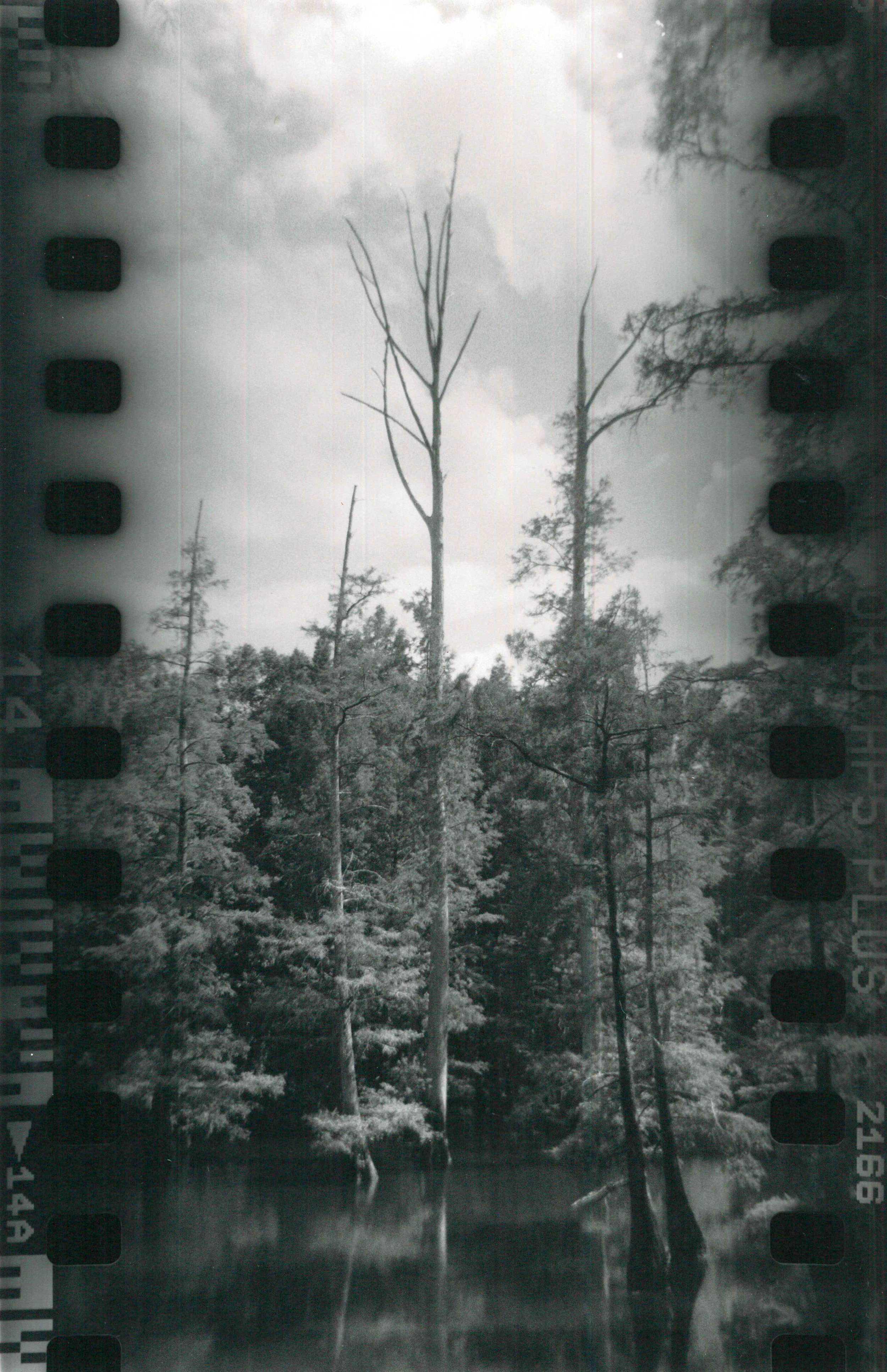 Ilford HP5 Plus film on Ilford silver gelatin paper