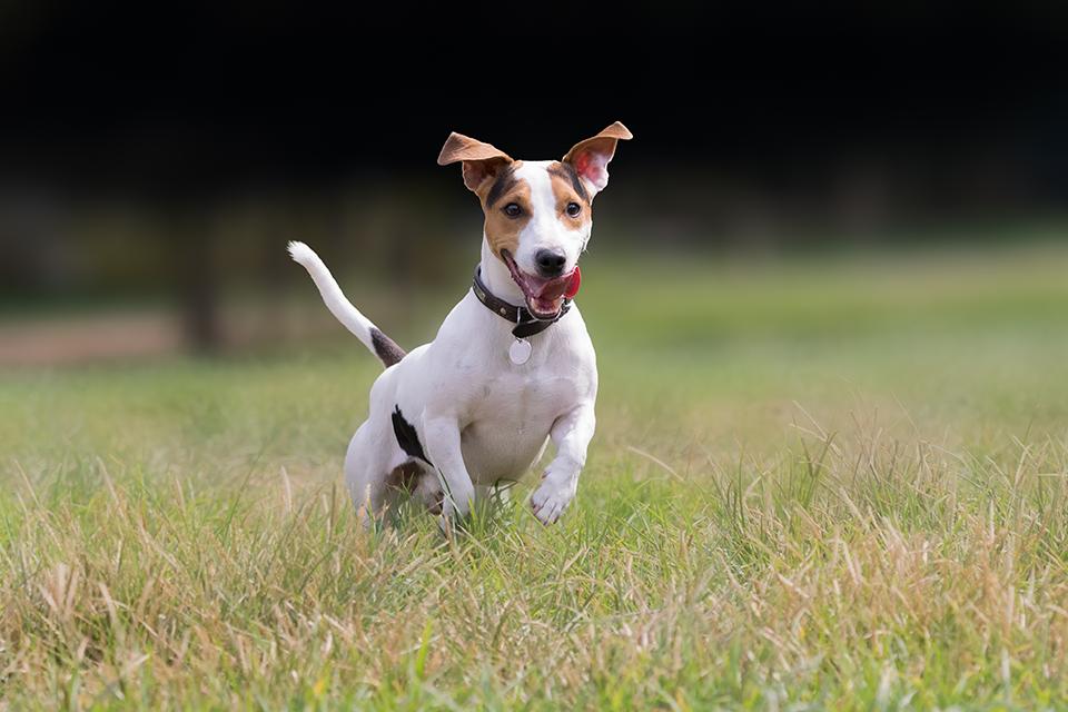 canine-obedience.jpg