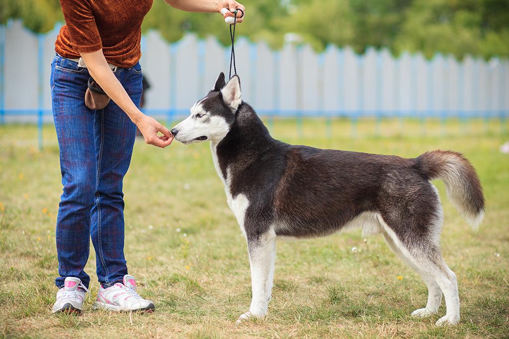 dog-training-leash-albany-ny.png