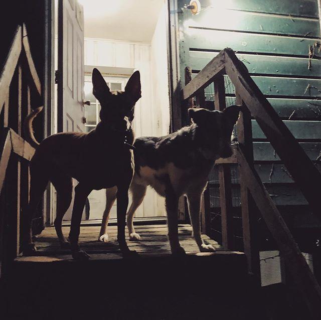 Kaya and Cooper
