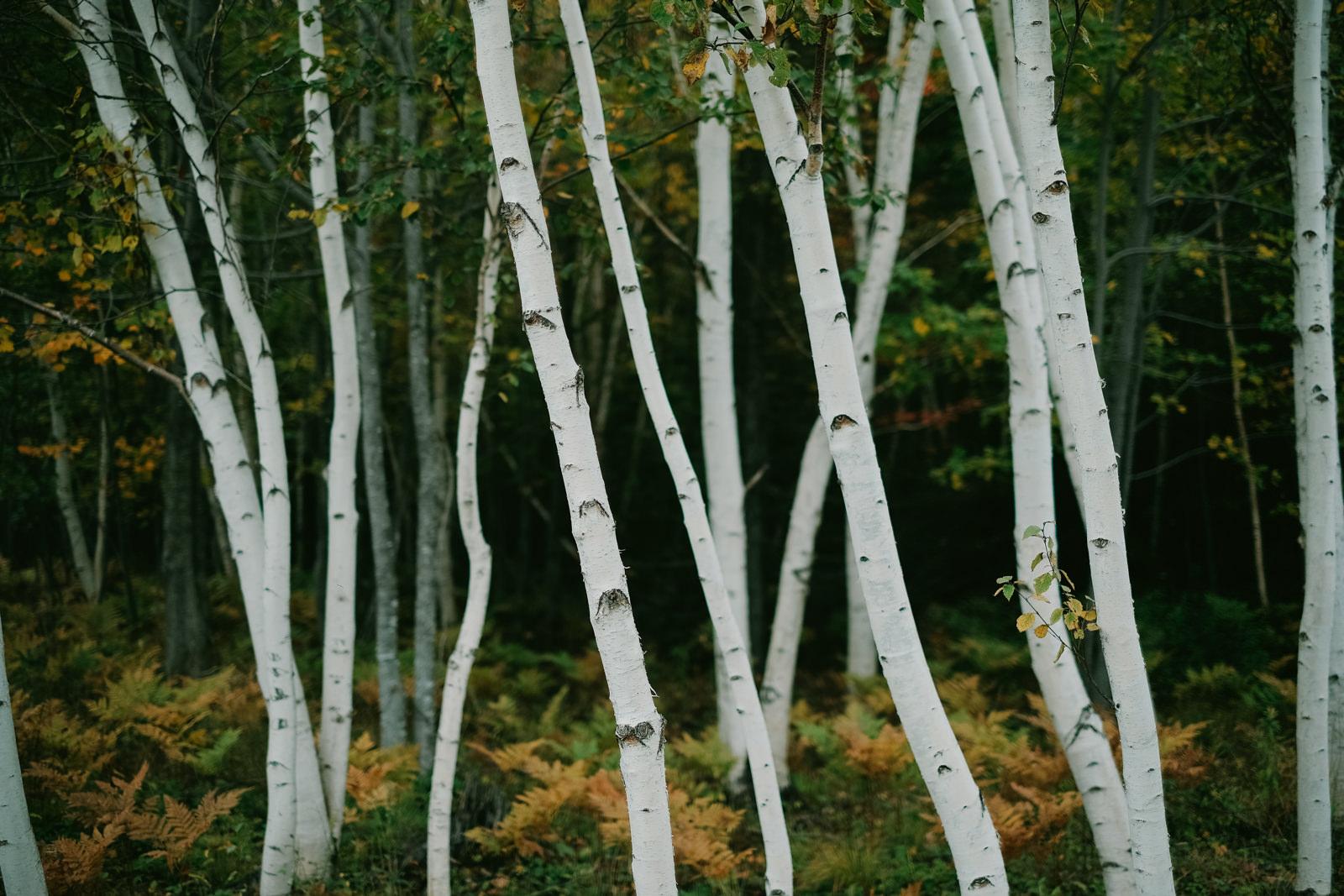 Fall Pictou Lodge Wedding-21.jpg
