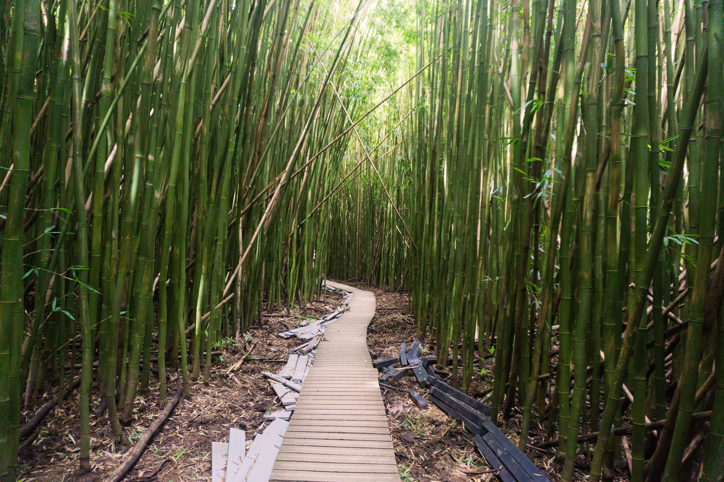 AstroBandit_Maui_Hawaii_Hana_WaimokuFalls_BambooForest.jpg