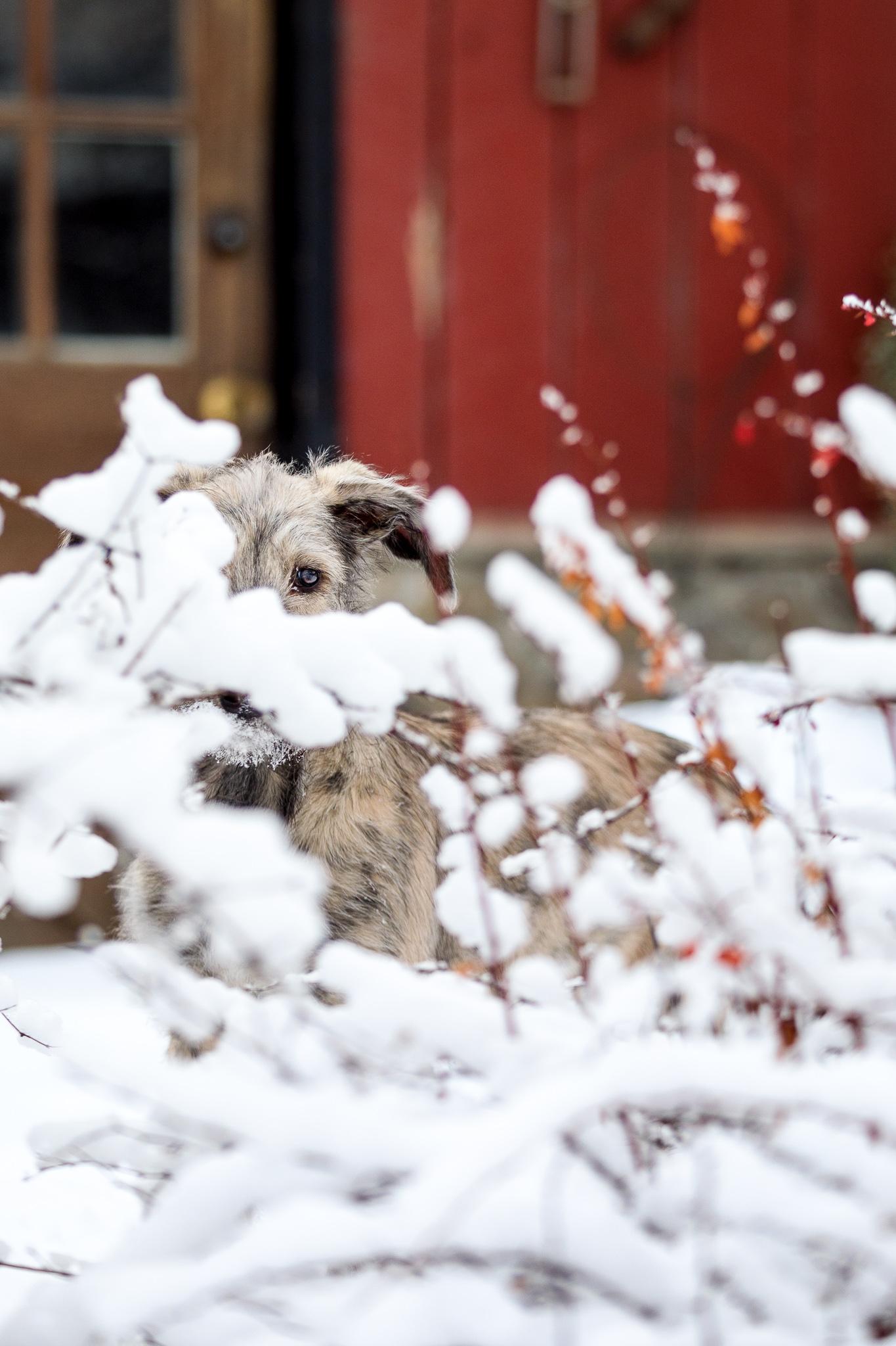 Dog hide and seek