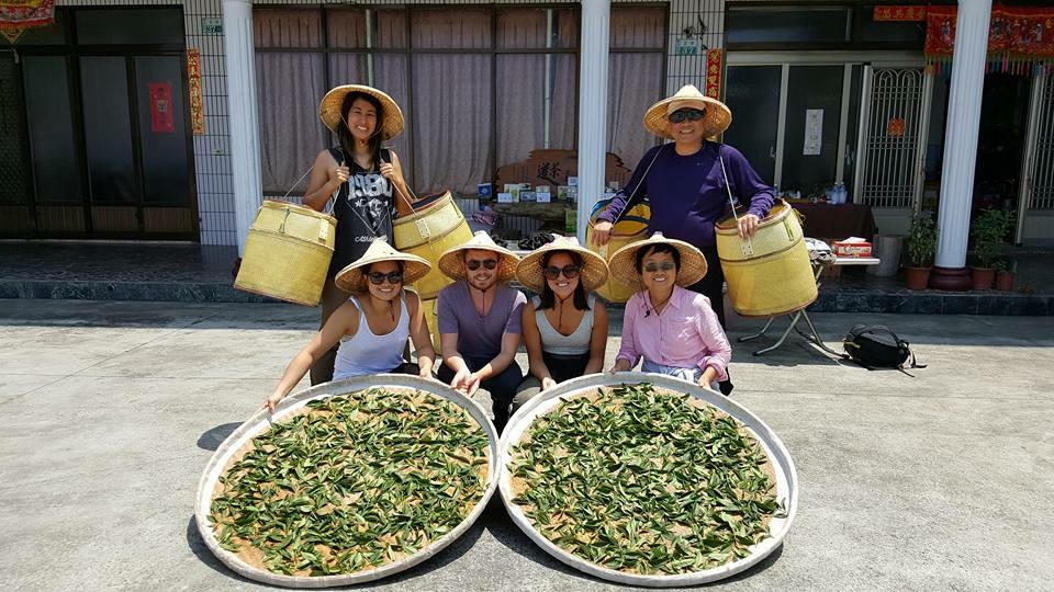 Our tea harvest at Alishan!