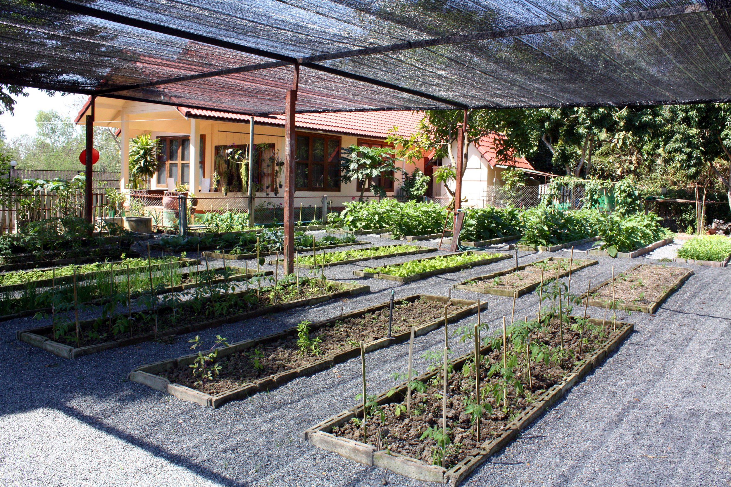 Her herb and vegetable garden.