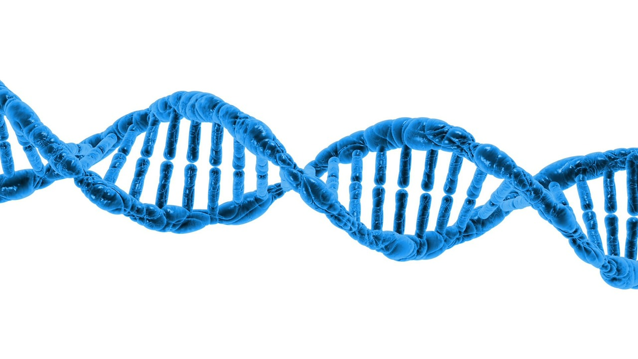 The minor allele differs from the major allele in having three differences in the DNA sequence in the area involved in turning on nicotine-related genes. - Image Credit:  PublicDomainPictures