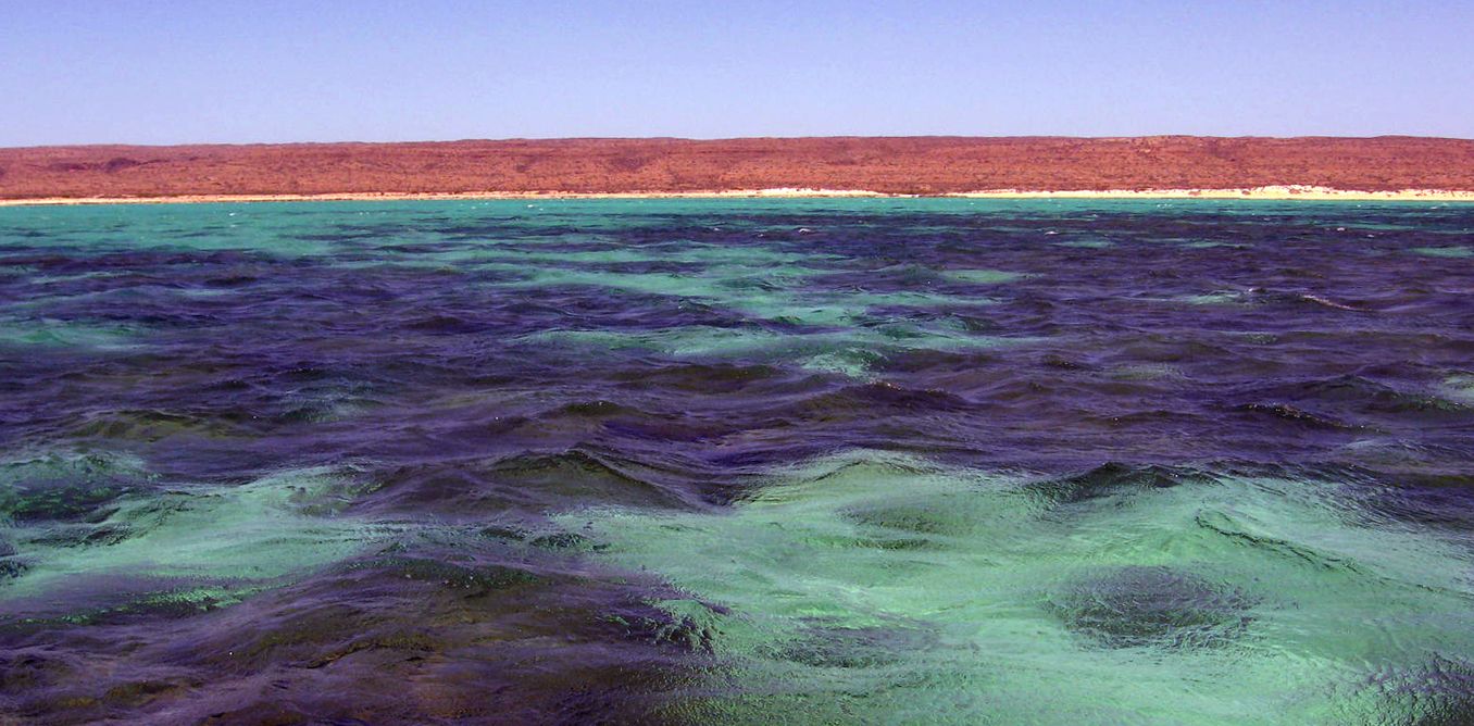 Teh land may be dry, but Western Australia's waters are full of life - Image Credit Russ Babcock, Author provided