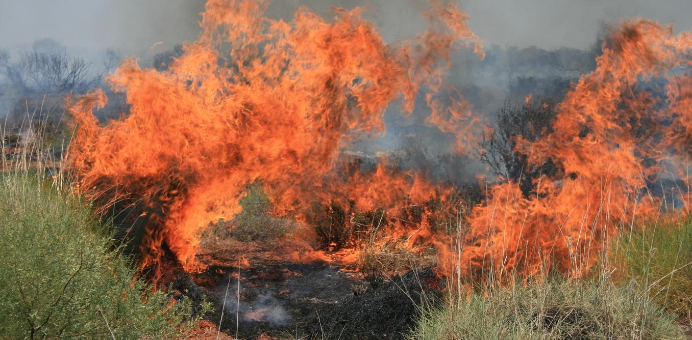 Extreme fire events are pushing Australian wildlife towards extinction. - Image Credit: Rob Davis,Author provided