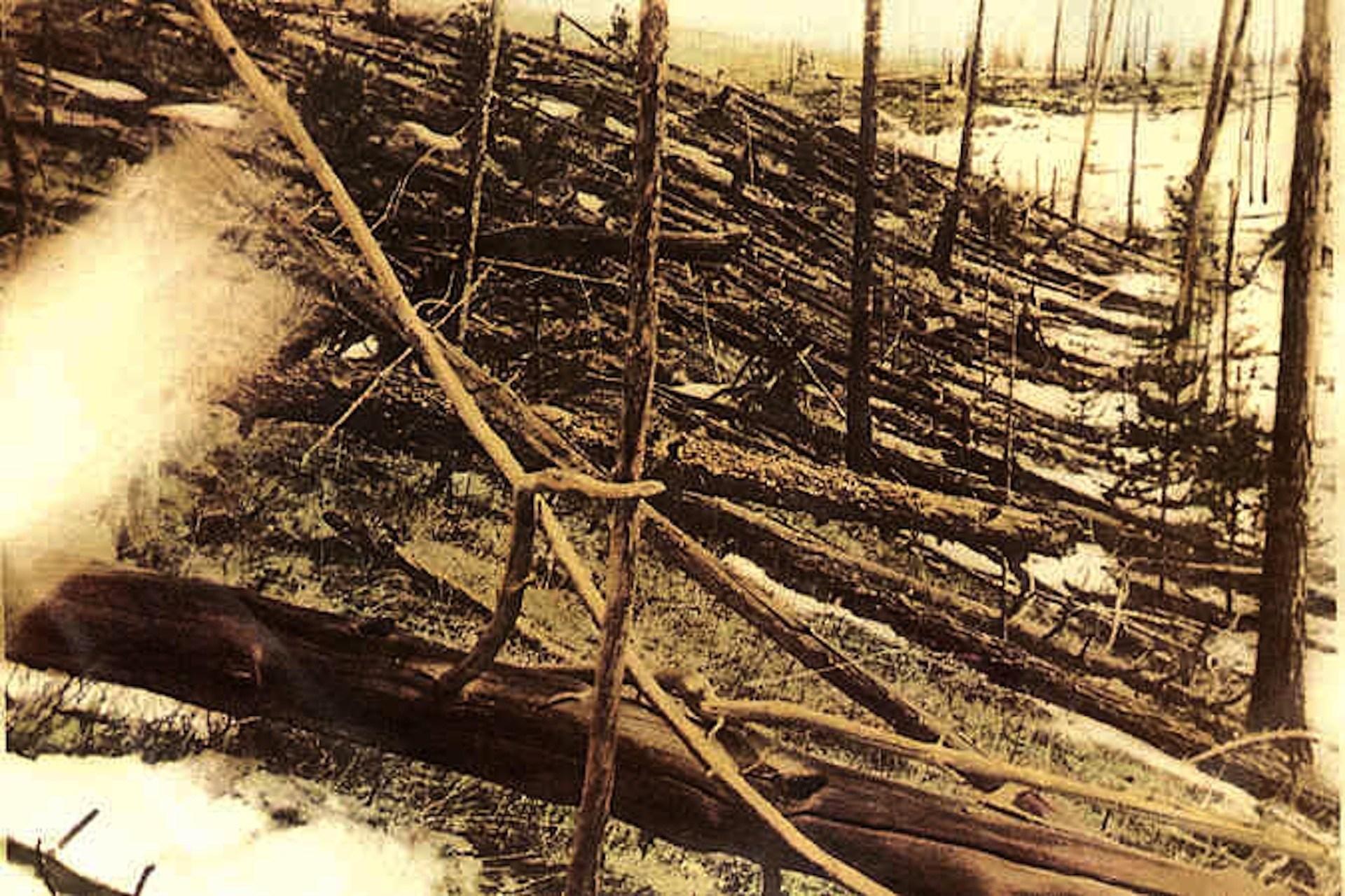 Trees knocked over by the Tunguska blast. - Image Credit: Leonid Kulik/wikimedia