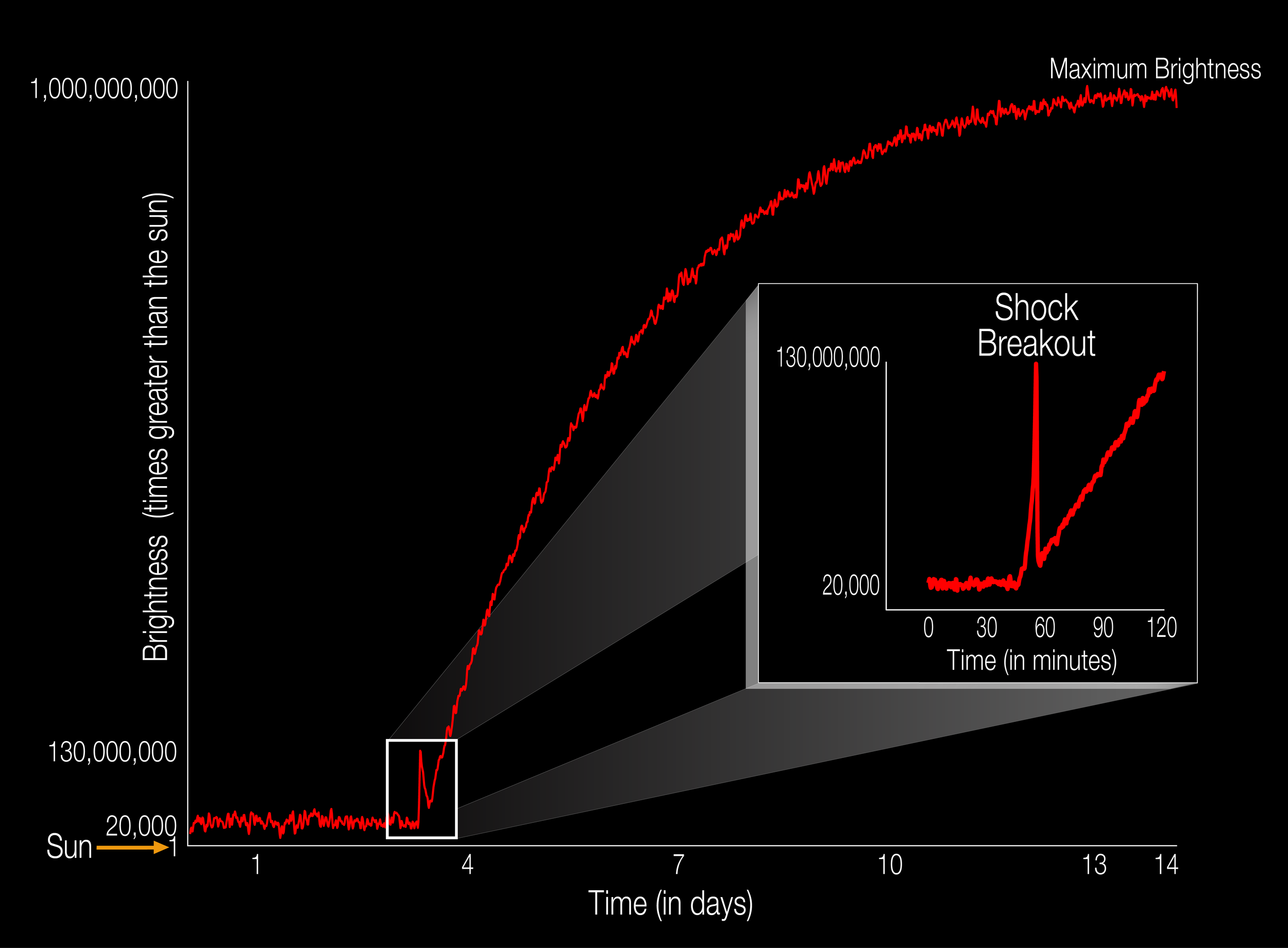 The diagram illustrates the brightness of a supernova event relative to the sun as it unfolds. For the first time, a supernova shockwave has been observed in the optical wavelength or visible light as it reaches the surface of the star. This early flash of light is called a shock breakout. The explosive death of this star, called KSN 2011d, as it reaches its maximum brightness takes 14 days. The shock breakout itself lasts only about 20 minutes, so catching the flash of energy is an investigative milestone for astronomers. The unceasing gaze of NASA's Kepler space telescope allowed astronomers to see, at last, this early moment as the star blows itself to bits. Supernovae like these — known as Type II — begin when the internal furnace of a star runs out of nuclear fuel causing its core to collapse as gravity takes over. This type of star is called a red supergiant star and it is 20,000 times brighter than our sun. As the supergiant star goes supernova, the energy traveling from the core reaches the surfaces with a burst of light that is 130,000,000 times brighter than the sun. The star continues to explode and grow reaching maximum brightness that is about 1,000,000,000 times brighter than the sun. - Image   Credits: NASA Ames/W. Stenzel
