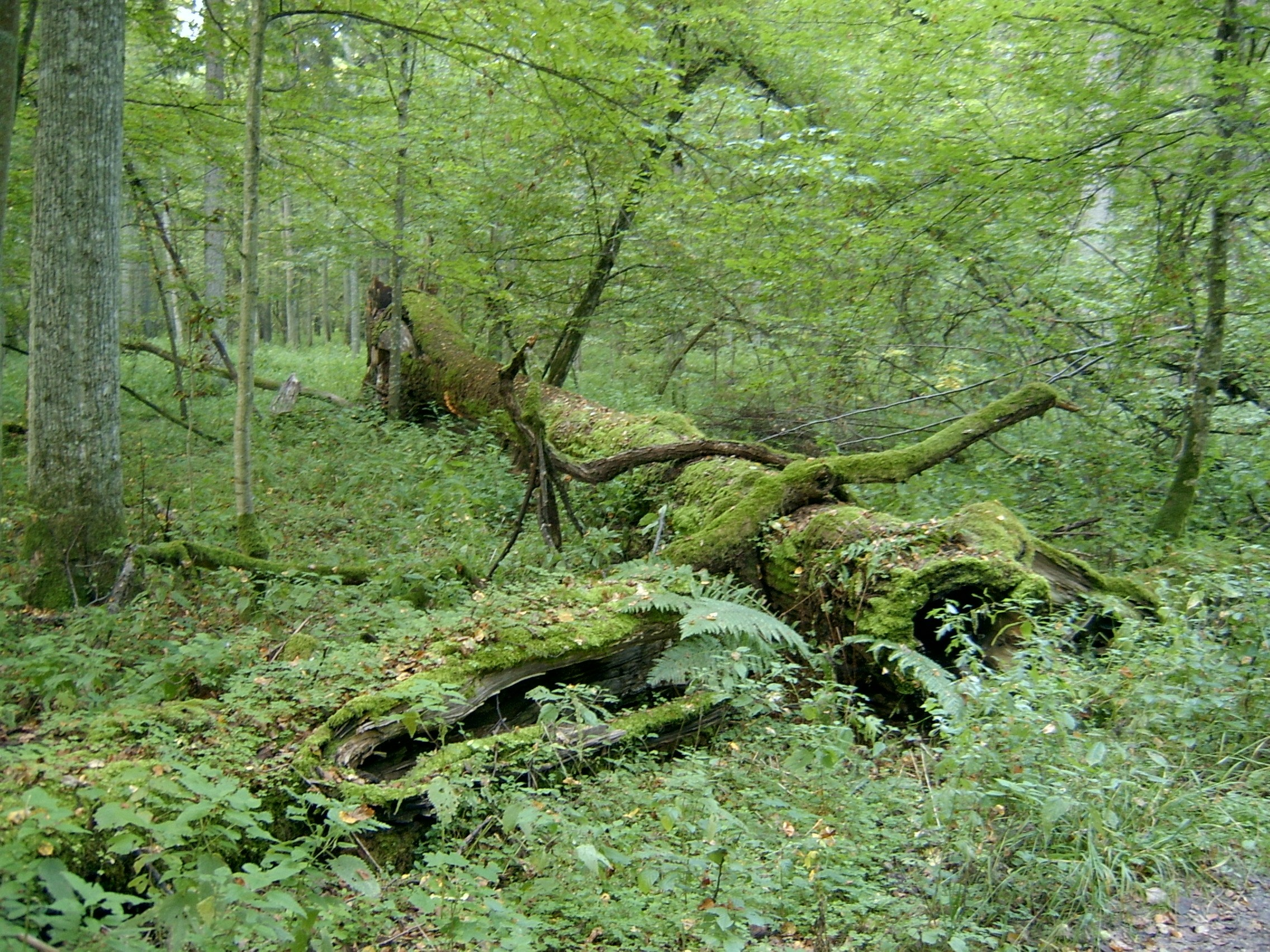 The forest food web starts here – Image Credit:  Ralf Lotys/WikimediaCommons