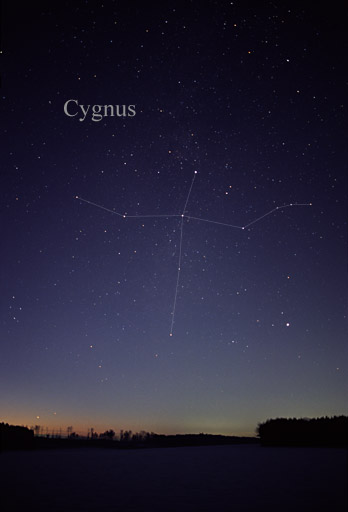 Cygnus. – Image Credit: Till Credner/wikimedia