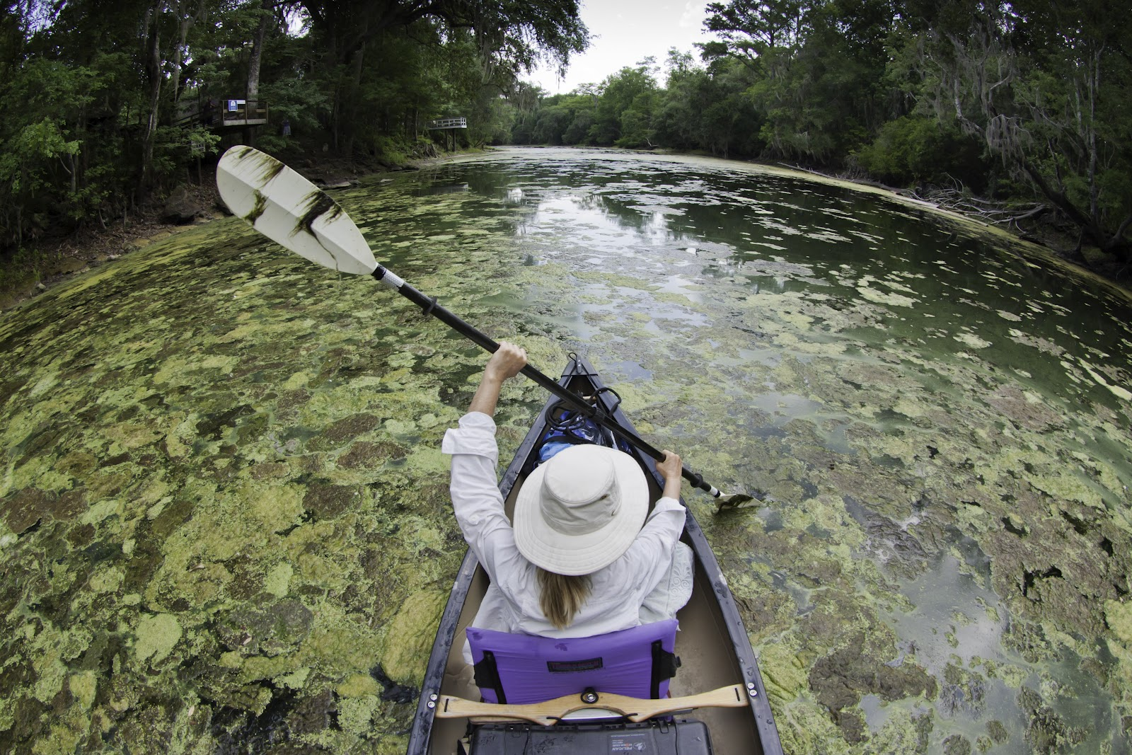 Algae blooms from excess nutrients in the waterways are common and becoming more common in developed countries. - Image Credit: John Moran/EPA