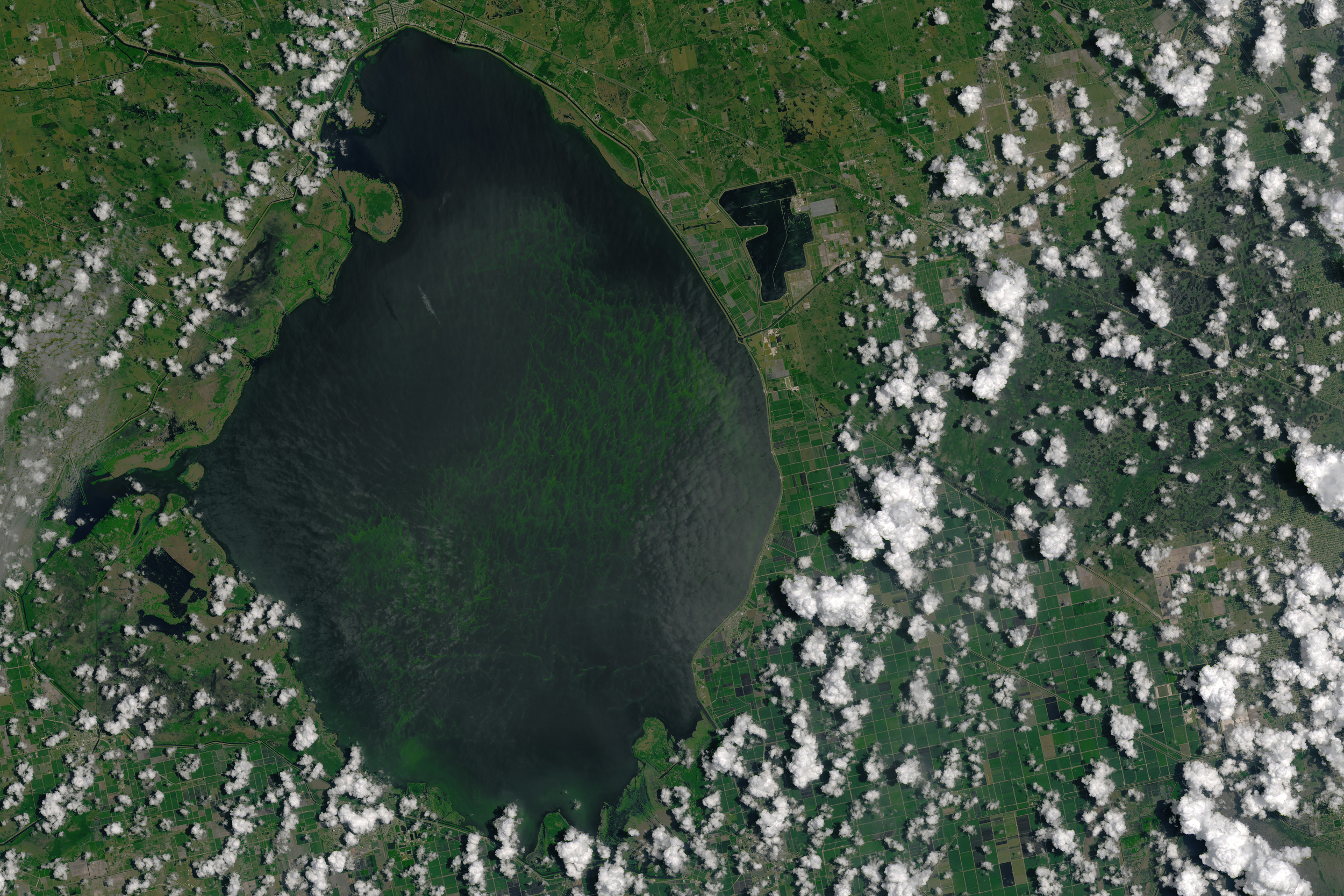 The algae bloom this summer was so large in Lake Okeechobee that it was visible from space. – Image Credit:  NASA