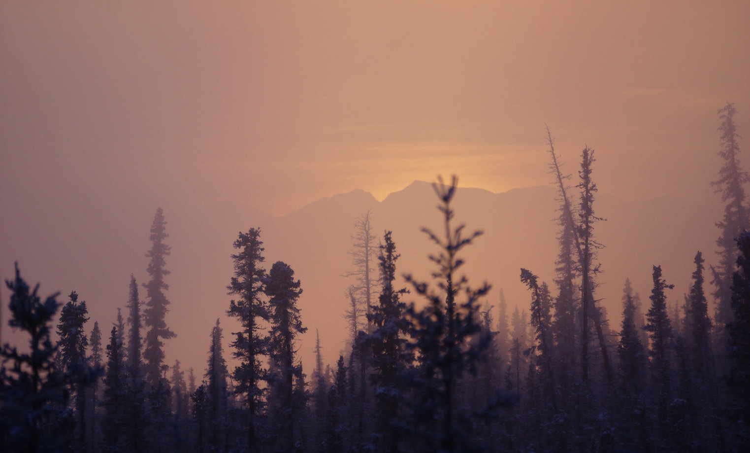 Boreal forests such as this one in Alaska are projected to enter into a different climatic zone from rising temperatures due to climate change and fare worse in the future. – Image Credit: akgypsy37/flickr , CC BY-NC-ND