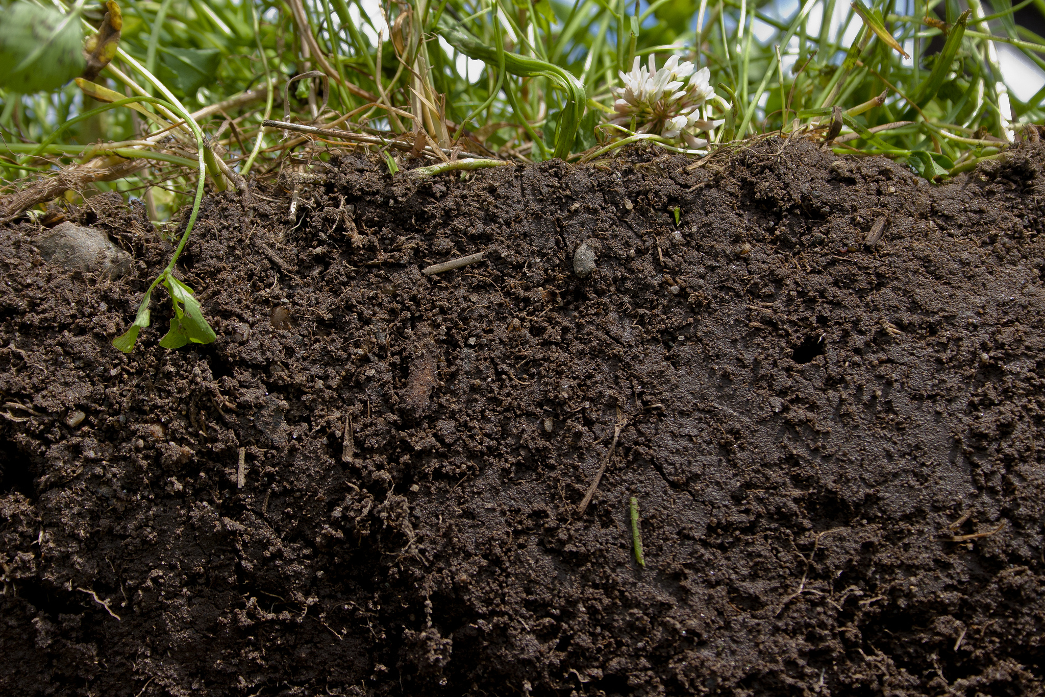 Planting a diverse blend of crops and cover crops, and not tilling, helps promote soil health. - Image Credit: Catherine Ulitsky, USDA/Flickr , CC BY