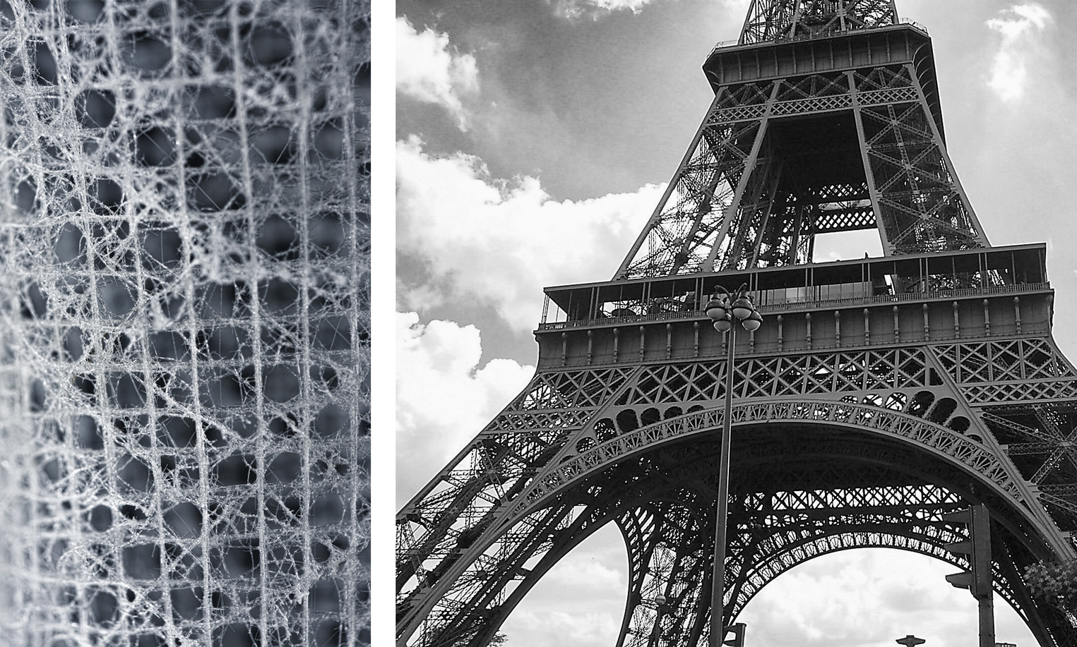 The intricate skeleton of  Euplectella aspergillum  (left), and the Eiffel Tower (right). Both structures are composed of an assembly of beam-like elements. - Image Credit: Michael A. Monn,  CC BY-ND