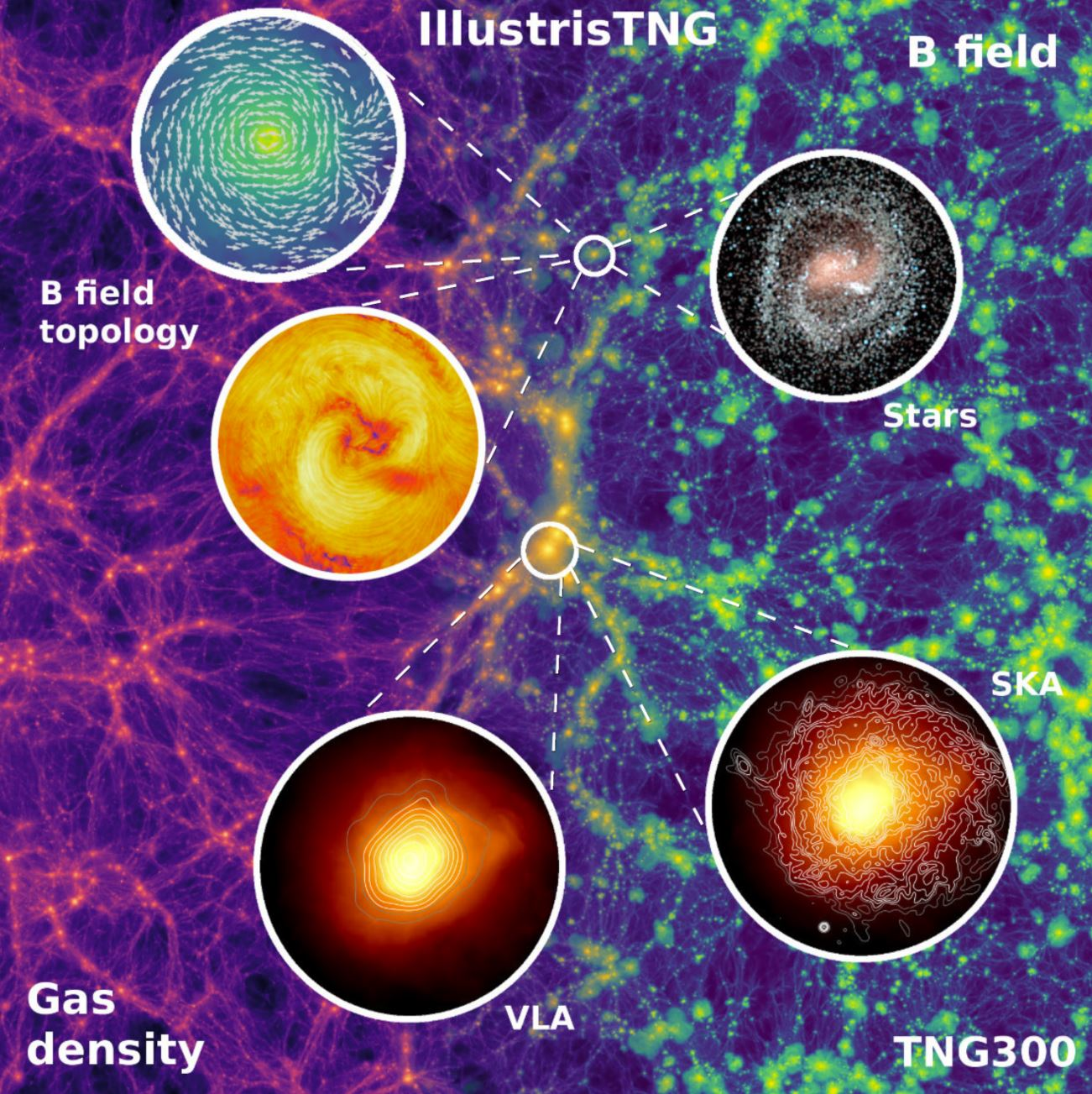 Gas density (left) and magnetic field strength (right) centered on the most massive galaxy cluster. - Image Credit:  Illustris Team