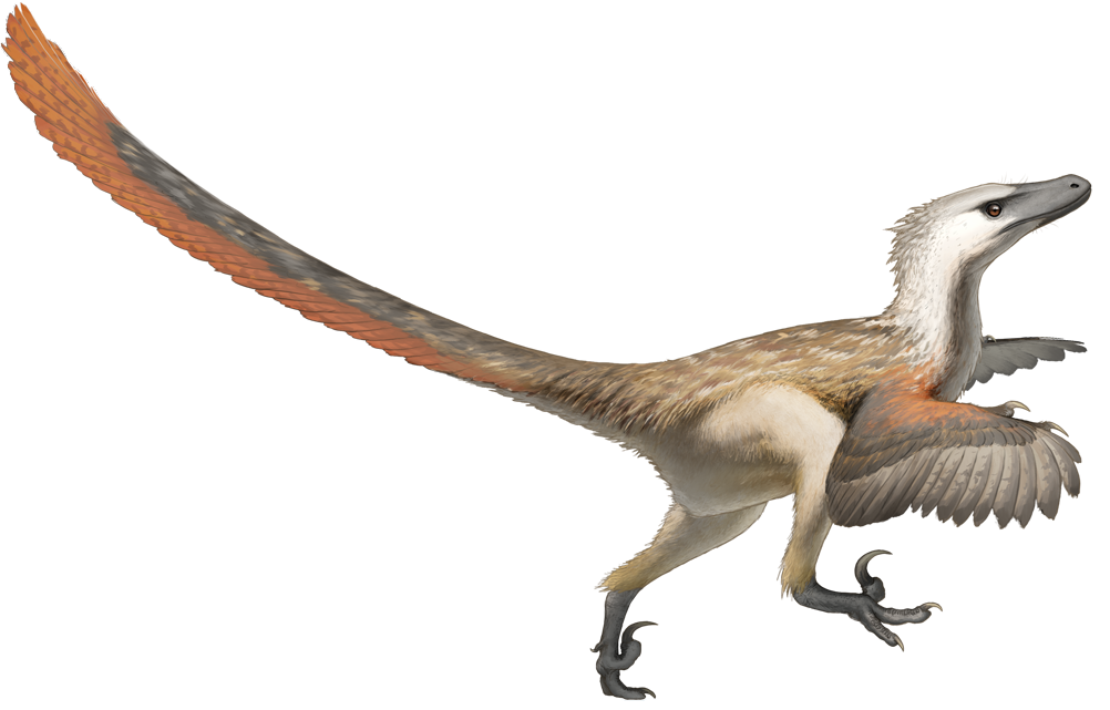 A Velociraptor can't be resurrected in a chicken egg - Image Credit:  Fred Wierum via Wikimedia Commons