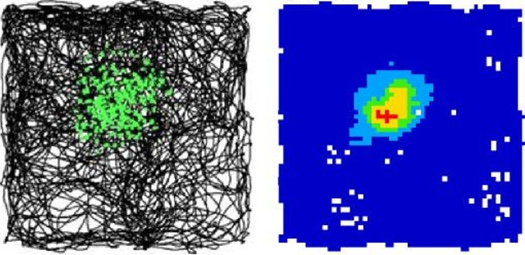 Left: an animal's trajectory (black lines) as it explores a square box. Green dots indicate locations where the place cells was active. Right: colour-coded regions of activity in the square environment (blue means silent, red means maximal activity). - Images reproduced from Barry C, Bush D. From A to Z: a potential role for grid cells in spatial navigation. Neural systems & circuits. 2012 Dec;2(1):6.,  CC BY