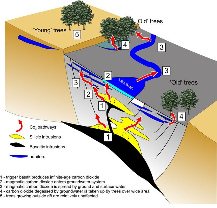 This conceptual image shows how gas from the triggering event, decades before the eruption, works its way into the groundwater system and is eventually incorporated in the wood of the trees that we date. - Image Provided by authors,  CC BY-ND