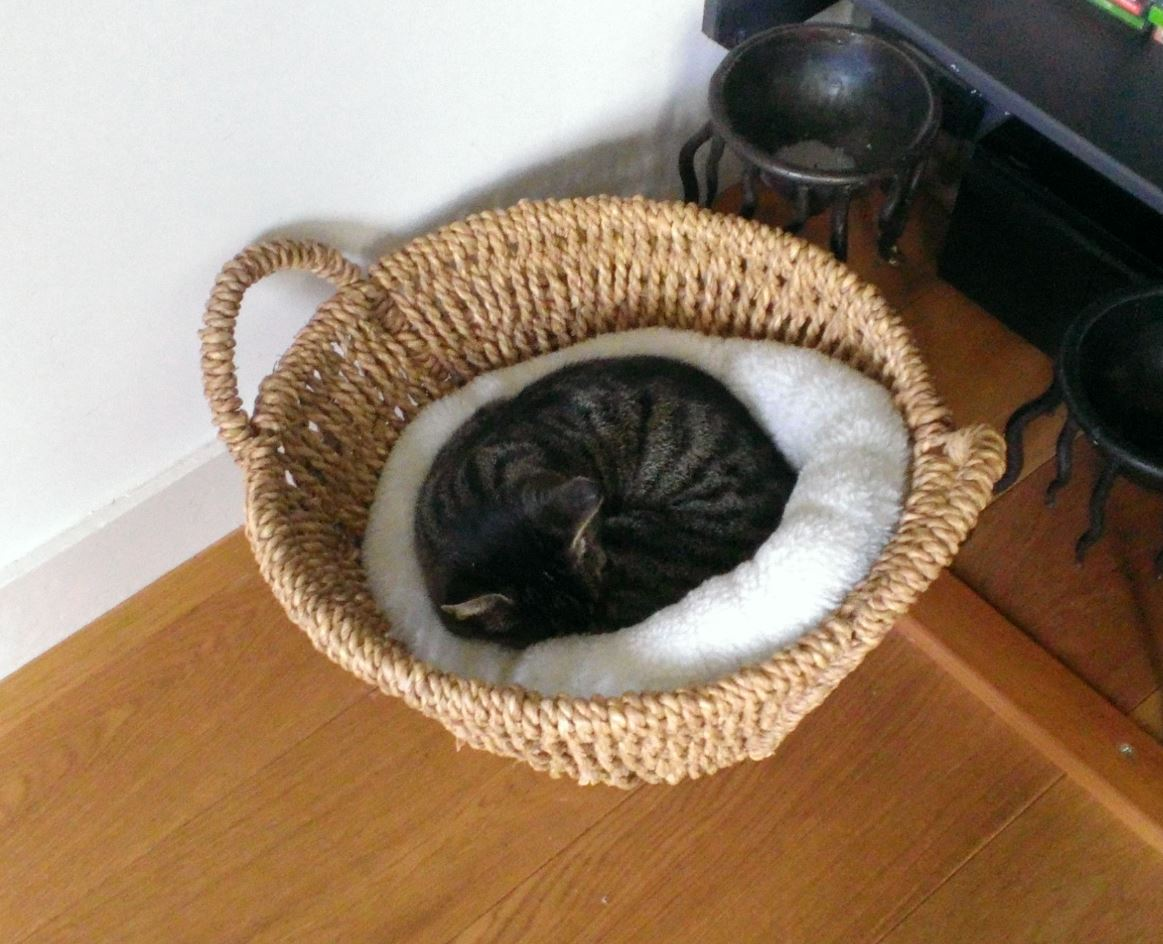 A cozy hiding spot could help anxious dogs and cats. - Universal-Sci  CC BY 2.0