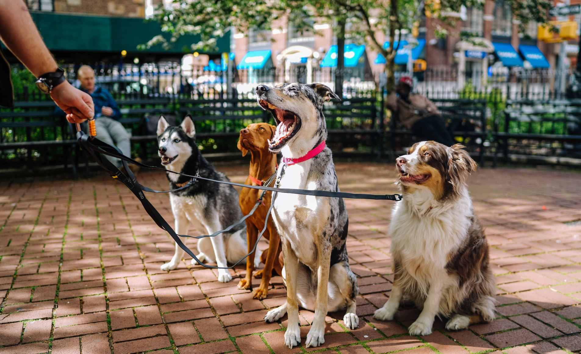 In addition to the health benefits of physical activity, walking your dog has many social and community benefits. - Image Credit:  Matt Nelson via Unsplash