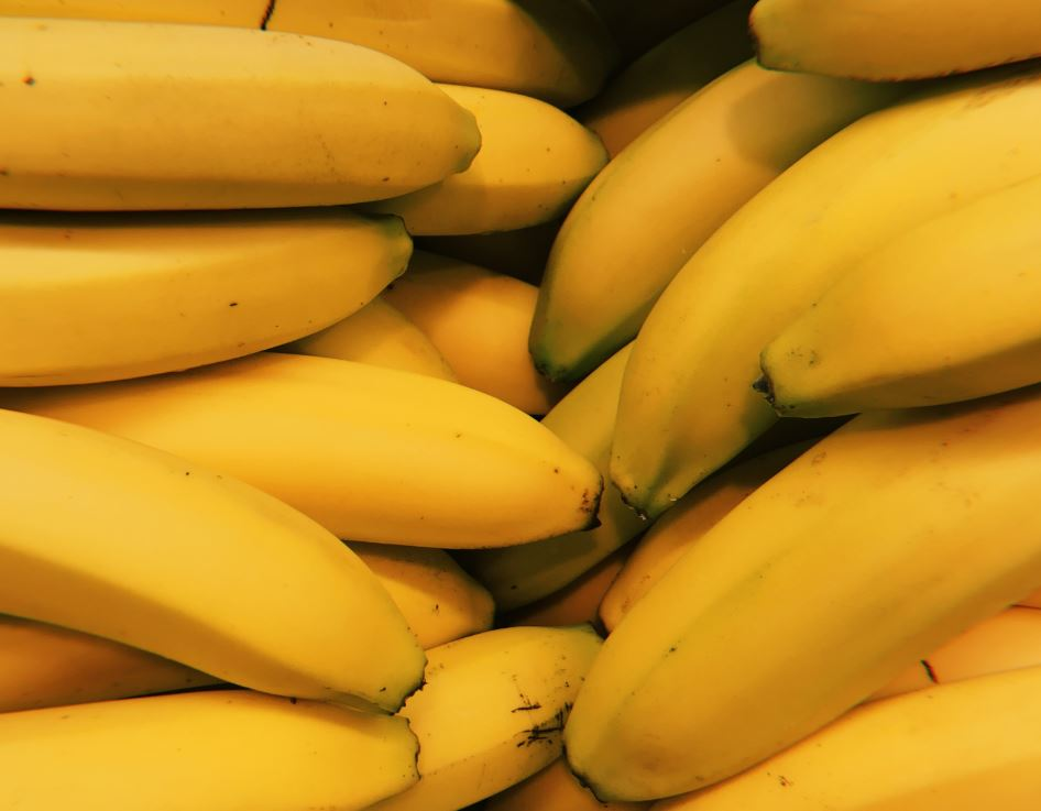 Many plantations only grow one type of banana which makes them vulnerable - Image Credit:  Ioana Cristiana via Unsplash