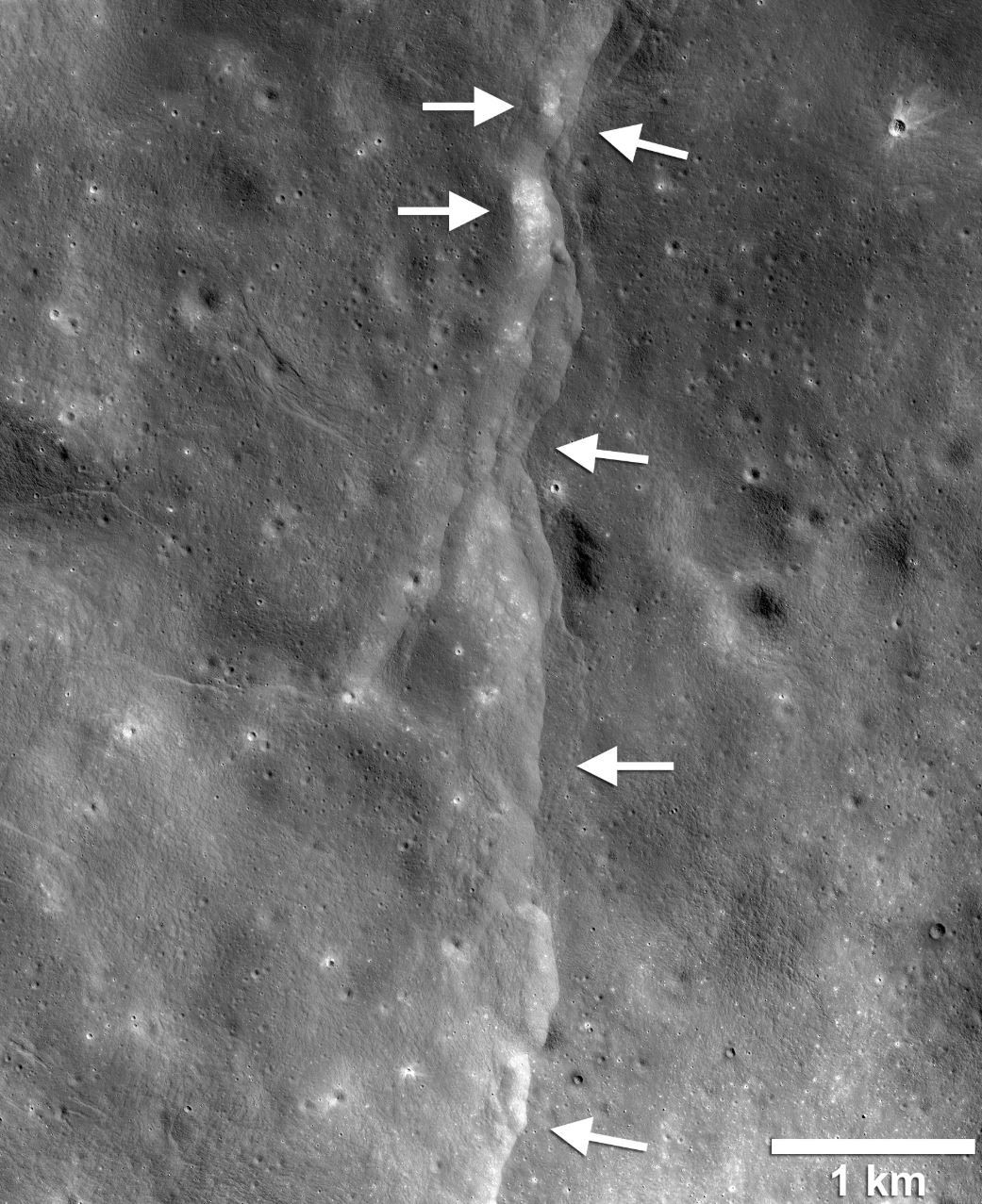 This prominent lunar lobate thrust fault scarp is one of thousands discovered in Lunar Reconnaissance Orbiter Camera (LROC) images. The fault scarp or cliff is like a stair-step in the lunar landscape (left-pointing white arrows) formed when the near-surface crust is pushed together, breaks, and is thrust upward along a fault as the Moon contracts. Boulder fields, patches of relatively high bright soil or regolith, are found on the scarp face and back scarp terrain (high side of the scarp, right-pointing arrows). Image LROC NAC frame M190844037LR. - Image Credit: NASA/GSFC/Arizona State University/Smithsonian - (click to enlarge)